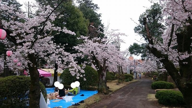 小山市 城山公園 桜